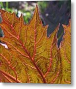 Backlit Leaf 2 Metal Print