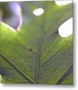Backlit Leaf Metal Print