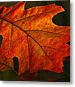 Backlit Leaf Metal Print