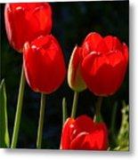 Backlit Red Tulips Metal Print
