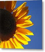 Backlit Sunflower Metal Print