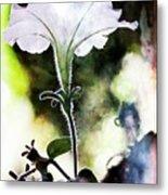 Backlit White Flower Metal Print