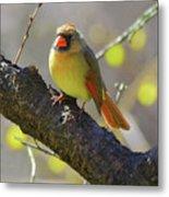 Backyard Bird Female Northern Cardinal Metal Print