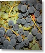 Backyard Garden Series - Grapes And Vines Metal Print
