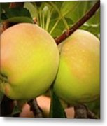 Backyard Garden Series - Two Apples Metal Print