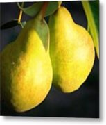 Backyard Garden Series - Two Pears Metal Print