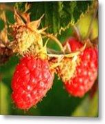 Backyard Garden Series - Two Ripe Raspberries Metal Print