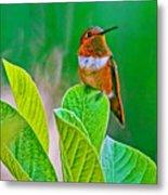 Backyard Hummingbird #22 Metal Print