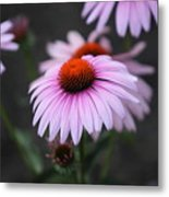 Backyard Wonders Metal Print