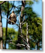 Bad Feather Day Metal Print