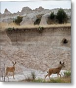 Badlands Deer Sd Metal Print