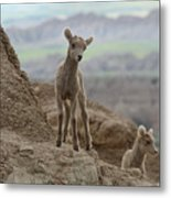 Badlands Dynamic Duo Metal Print