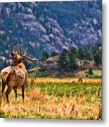 Badlands Elk  Metal Print