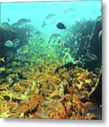 Bahamas Shipwreck Fish Metal Print