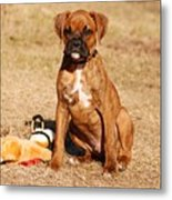 Bailey The Boxer Puppy Metal Print