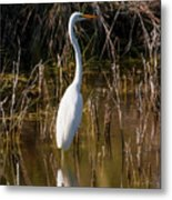 Bailey Tract Egret Two Metal Print
