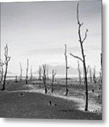 Bako National Park 2 Metal Print