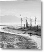 Bako National Park At Low Tide. Metal Print