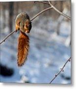 Balancing Squirrel Metal Print