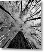 Bald Cypress Sky Metal Print