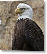 Bald Eagle - Portrait 2 Metal Print