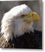 Bald Eagle 3 Metal Print