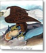 Bald Eagle Audubon Birds Of America 1st Edition 1840 Royal Octavo Plate 14 Metal Print