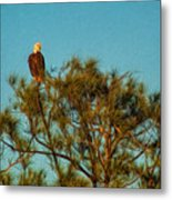 Bald Eagle Burnt Store Marina Florida Metal Print