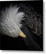 Bald Eagle Cleaning Metal Print