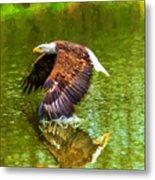 Bald Eagle Cutting The Water Metal Print