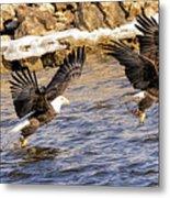 Bald Eagle Fishing Pano Metal Print