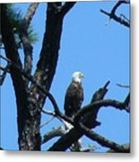 Bald Eagle II Metal Print