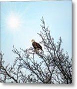 Bald Eagle In A Tree Enjoying The Sunlight Metal Print