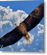 Bald Eagle In Flight Calling Out Metal Print