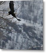 Bald Eagle In Flight-signed-#4014 Metal Print
