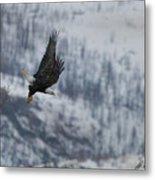 Bald Eagle In Flight-signed-#4016 Metal Print