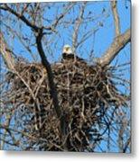 Bald Eagle Lookout  3661 Metal Print