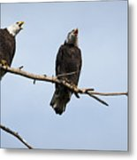 Bald Eagle Music Metal Print