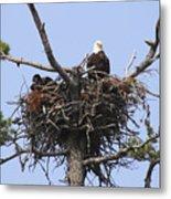Bald Eagle Nest Metal Print
