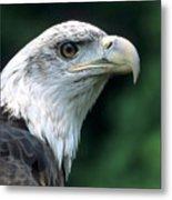 Bald Eagle On Guard Metal Print