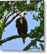 Bald Eagle On Watch Metal Print