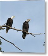 Bald Eagle Perch Metal Print