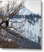 Bald Eagle Perched-signed-#4008 Metal Print