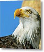 Bald Eagle Profile 4 Metal Print