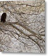 Bald Eagle-signed-#4879 Metal Print