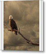 Bald Eagle Storm Metal Print