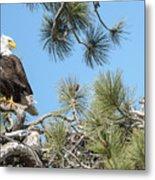 Bald Eagle With Nestling Metal Print