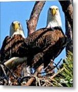 Bald Eagles In Nest Metal Print