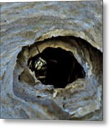 Bald Face Hornet Metal Print