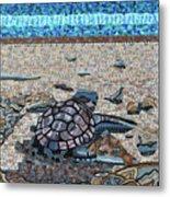 Bald Head Island, Loggerhead Sea Turtle Metal Print